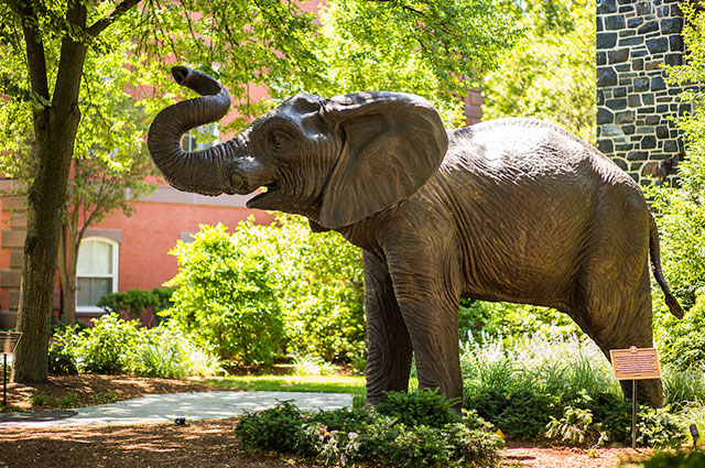 Jumbo statue on the Tufts campus